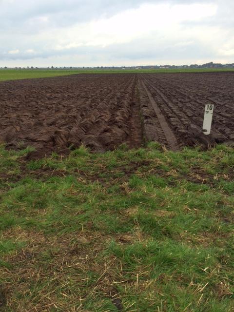 grasland Veendam Wouter